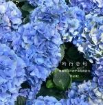 吟行恋句-2 斎藤牧子の恋する写真俳句