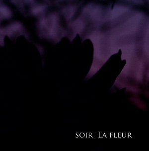 soir La fleur