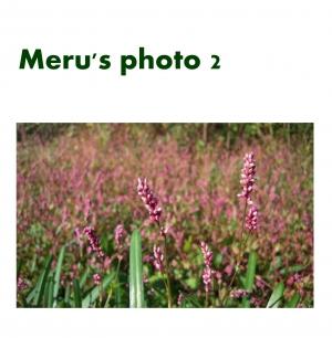 Meru's photo 2