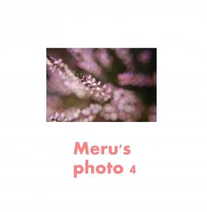 Merus photo 4