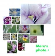 Merus photo 7