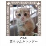 2020葉ちゃん